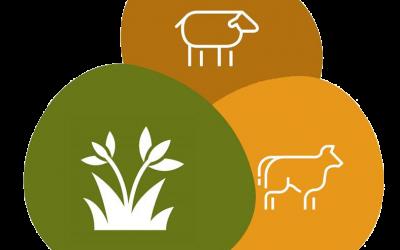 Digital Shepherd website teaches the  importance of conservation grazing